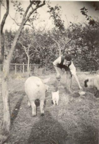 Lionel Ellis feeding his pigs