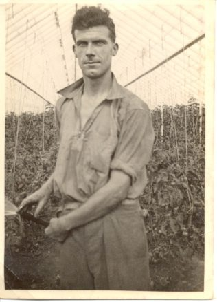 Lionel Ellis watering the tomatoes in his greenhouses